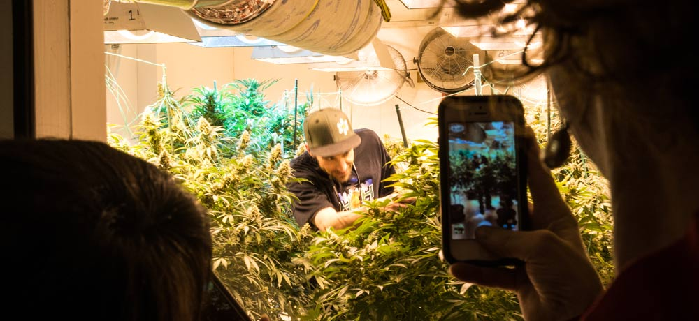 Insiders exclusive: Cannabis Experiences 101
